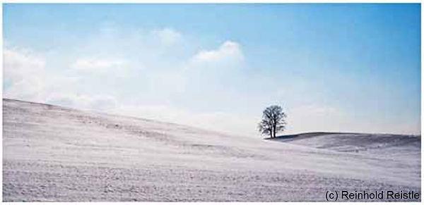 603 eiche in winterlandschaft.jpg
