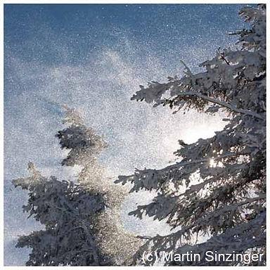 609 fichte mit schnee.jpg