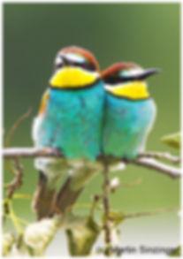 430 Bienenfresserpaar .jpg