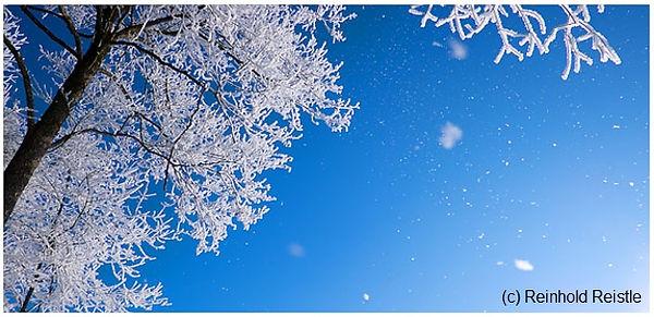 625 Baum mit Schnee 2017 29x14.jpg