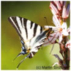 409 Schmetterling_Vorderseite.jpg