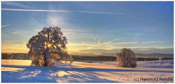 602 eiche im winter-sonnenaufgangslicht.