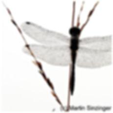 411 Libelle_Vorderseite.jpg