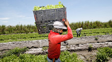 Protecting Foreign Growers Who Consign Produce or other Fresh Food to the U.S.
