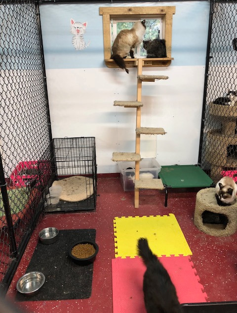 cat trees were donated!