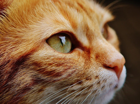 Aging Cats: How to Help Your Furry Friend Feel Great at Any Age