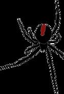 The Dark Times Shop Spider © 2021 Hatti