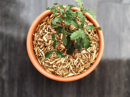 N'attendez plus pour pailler votre jardin à l'automne, utilisez du paillage de miscanthus !