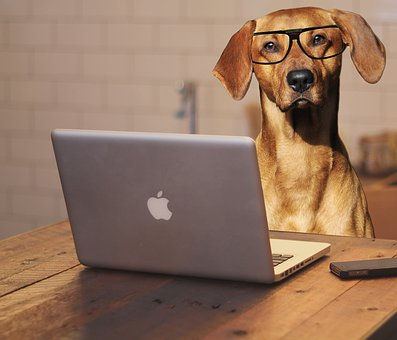 dog-computer__340.jpg