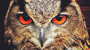 owl_0.jfif