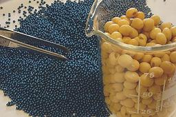 raw seed and coating.jpg
