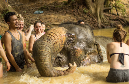 A day with the elephants