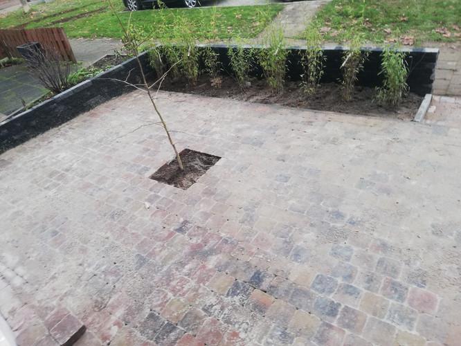 Elie Gardens 7