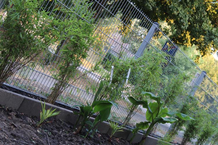 Elie Gardens 4