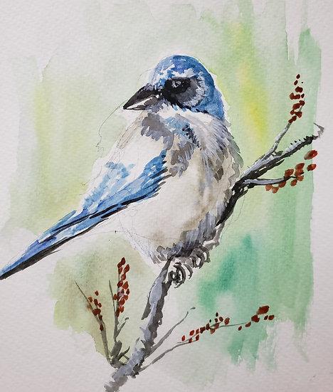 ORIGINAL 8x10 Watercolor Jay