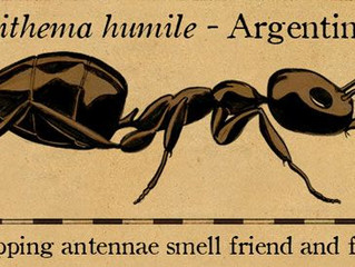 Highland Village & Flower Mound Texas Attached by Argentina (NO) Argentine Ants (YES)