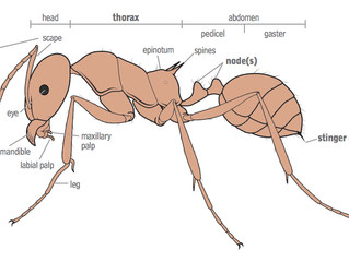 Texas has Ants! Know how to identify and Eliminate them.