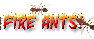 Don't let the Fire Ant Ruin your 4th of July