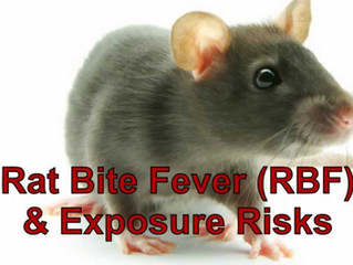 RAT BITE FEVER (RBF) & Exposure Risk!