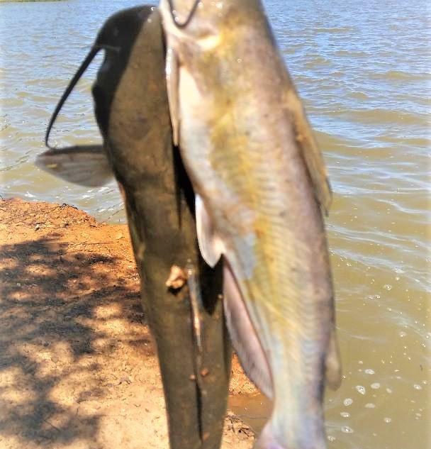 Catfishing Highland Village TX.