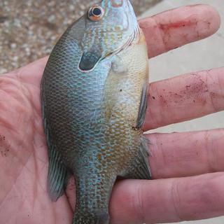 Did he really fish.jpg