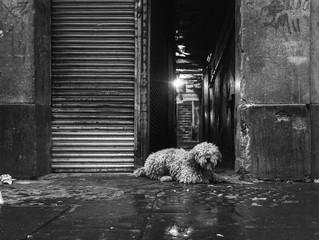 [Rennes/Pacé] Que faire si vous trouvez ou perdez un animal ?
