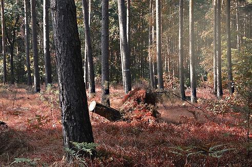 Wald-Brandenburg.jpg