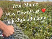 Josh Pond