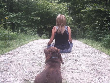  5  the Yogic Path   riflessione meditativa