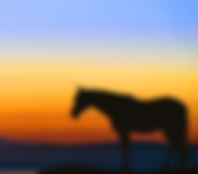 Horse1_edited.png