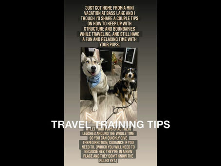 TRAVELING WITH YOUR DOG: SIMPLE WAYS TO KEEP UP ON STRUCTURE/BOUNDARIES & STAY RELEVANT.