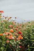 fvt-simply-perfect-flowers-87.jpg
