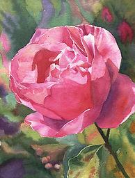 Tiburon Rose.jpg