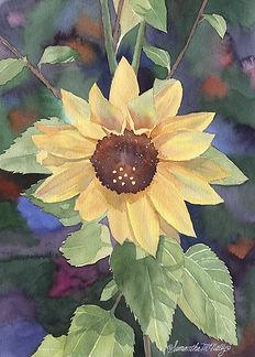 Delta Sunflower.jpg