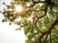 Reiki Energy Healing Sessions