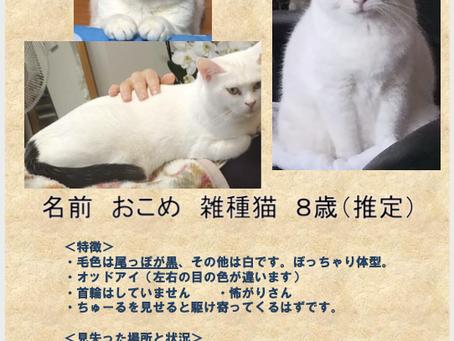 迷い猫を探すために😸