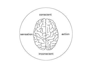 brain-schéma3.jpg