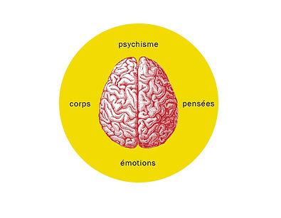 brain-schéma1.jpg
