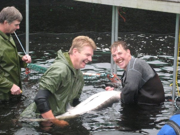 wrestling with sturgeon