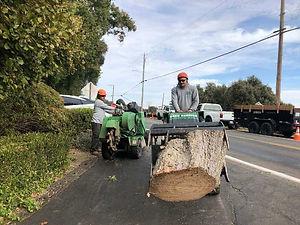 Sacrmeto Commercial Tree Service
