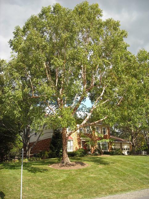 Residential Tree Pruning in Sacrameto, CA