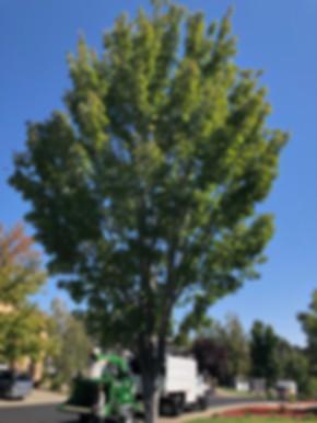 Tree Reduction in Sacramento, CA