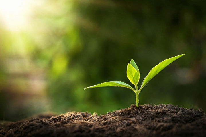 young-plant-growing-with-sunshine-nature