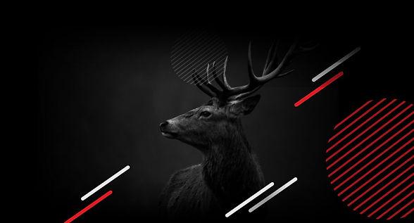 stag-banner-1200x647.jpg