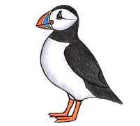 puffin-square.png
