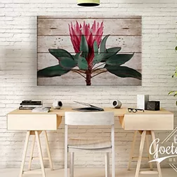 BF 2020 Rustic Protea Straight Up Bright Pink (A2)