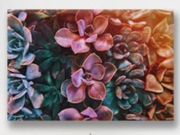 2020 Succulent Colours Table Runner