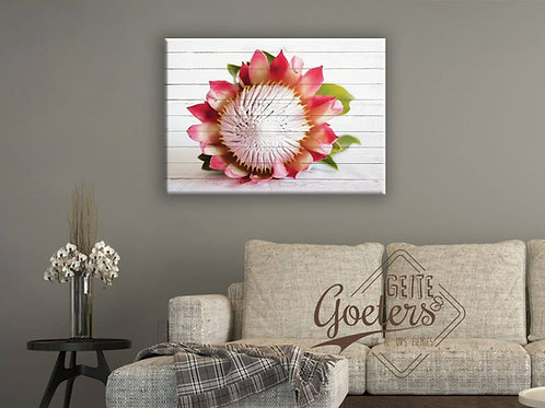 Protea Bright Pink Front