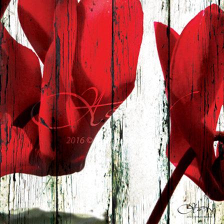 Red Cyclamen 2 - Small