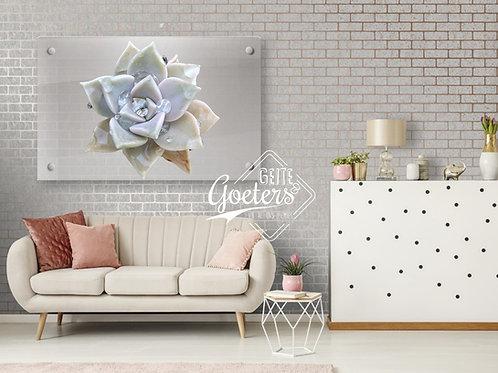 Perspex Succulent White